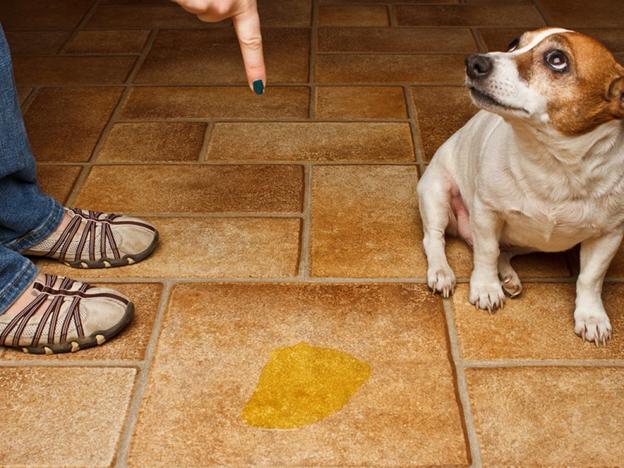 How do you remove pet odor?